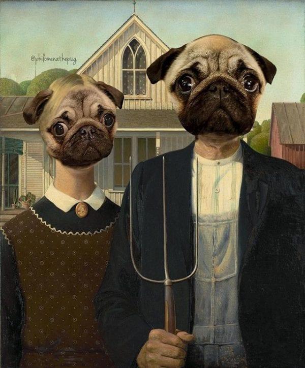 American Pug Gothic #photoshopfriday
