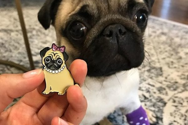 What do you think? Does this puggy look like me or what? ⠀⠀⠀⠀⠀⠀⠀⠀⠀ Get your own from @sngdesignco or look for my giveaway post to enter!