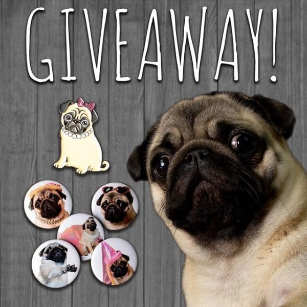 It's giveaway time! Who wants to win a sassy enamel pin or a set of sassy pin back buttons featuring ME from @sngdesignco ? These pins will look great anywhere and can add a bit of sass to any backpack, jacket, shirt, or harness. There will be 2 winners: 1 enamel pin and 1 set of 5 buttons. ⠀⠀⠀⠀⠀⠀⠀⠀⠀ How to enter: 1. Make sure you are following me @philomenathepug & @sngdesignco 2. Like this photo 3. Tag 2 sassy friends in the comments 4. Unlimited entries allowed – please tag only 2 friends per comment 5. Open Worldwide 🌎 6. Giveaway ends Saturday 9/8 Midnight ET ⠀⠀⠀⠀⠀⠀⠀⠀⠀ Want Bonus Entries? 1. Repost this photo and tag @sngdesignco and 2 friends 2. Repost as many times as you like but please only post once a day ⠀⠀⠀⠀⠀⠀⠀⠀⠀ Winners will be notified via a tag on this post and via dm! ⠀⠀⠀⠀⠀⠀⠀⠀⠀ ⠀⠀⠀⠀⠀⠀⠀⠀⠀ ———————— This giveaway is not affiliated or associated with Instagram.
