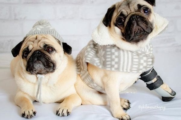 When you are ready for fall 🍁 🍂 With my bff @matildazpug
