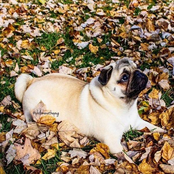 Happy Fall Y'all! 🍂