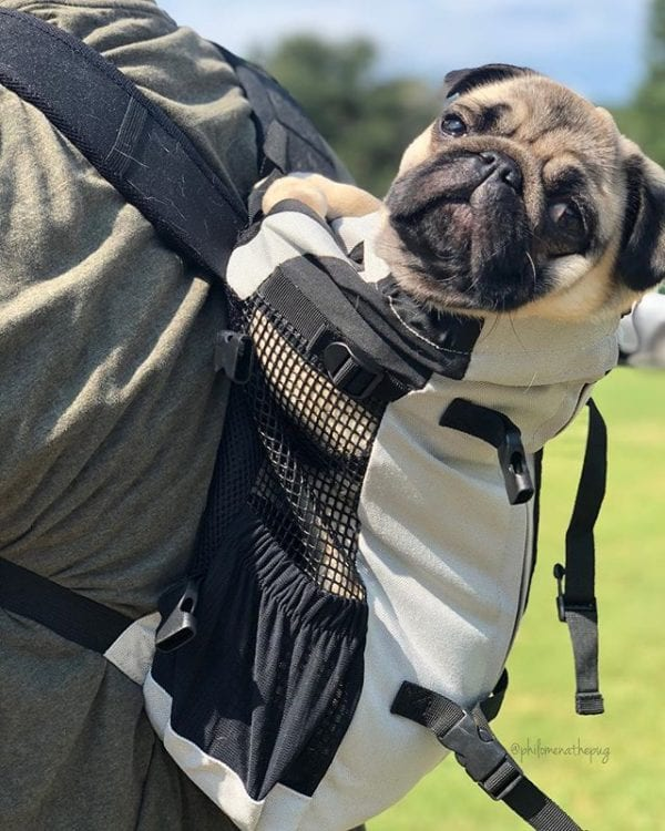 Happy Monday! How was your weekend friends? Mine was so fun, I went out with Daddy in my new @k9sportsack Air Plus. I am LOVING it so much. ⠀⠀⠀⠀⠀⠀⠀⠀ Now I can go anywhere with Daddy and stay cozy and comfy! ⠀⠀⠀⠀⠀⠀⠀⠀ #collab #havepugwilltravel #k9sportsack