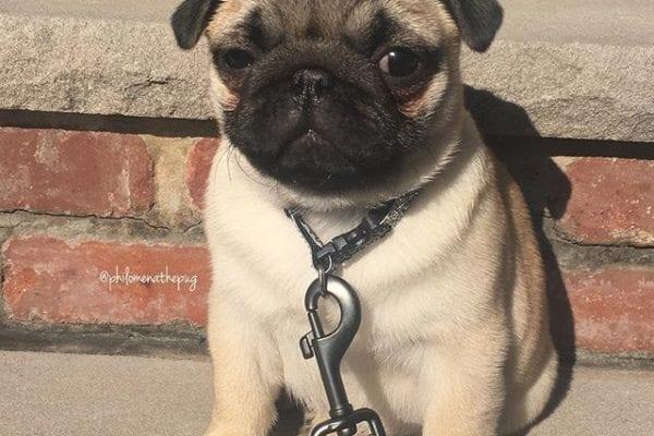 Chunky mushy puppy #flashbackfriday