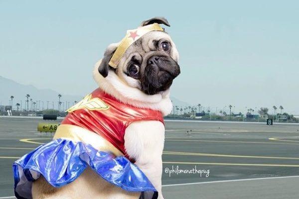 Guys…. I can't find my invisible jet. 😔 #wonderwoman #hempoween