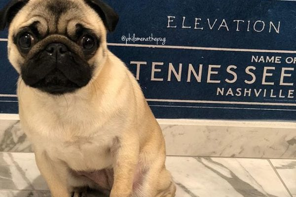 Good morning Nashville! So excited to head to the Mid-Tennessee @pugfestival.