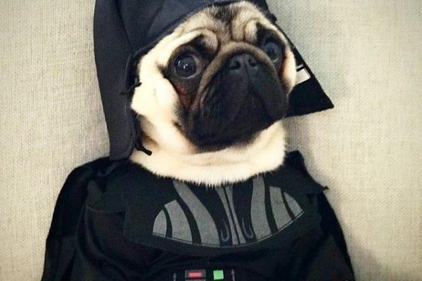 #TBT Pug Vader