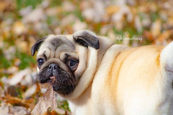 What leaf? 🍁 I wasn't snacking on leaves….#lookatthoserolls