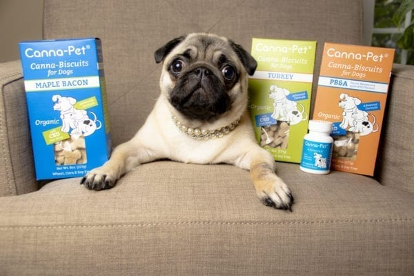 Canna-Pet Review – How Canna-Pet gave me my Sass back!