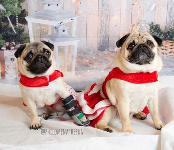 When Christmas comes early and you find out your bestie @matildazpug is moving to ATL 🍑 #pugstakingoveratlanta
