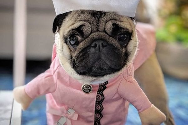 Mommy had sinus surgery?! Nurse Philomena reporting for duty! 30ccs of snackies stat!