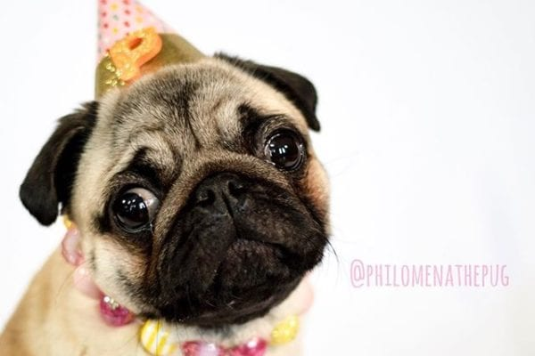 This puggy is getting ready for my birthday in a couple of weeks! What should I wish for?