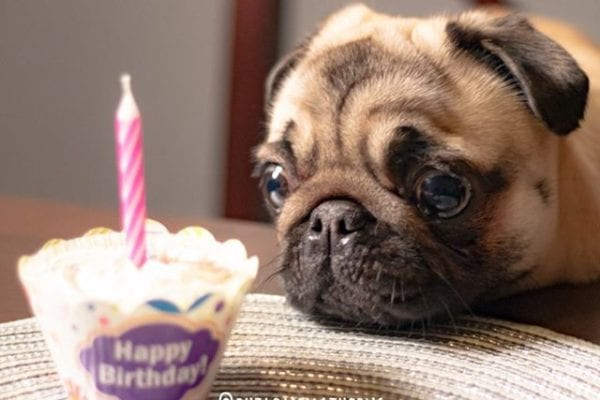 #TBT to my birthday 🎂 last year. I can't wait to celebrate Saturday with @matildazpug!