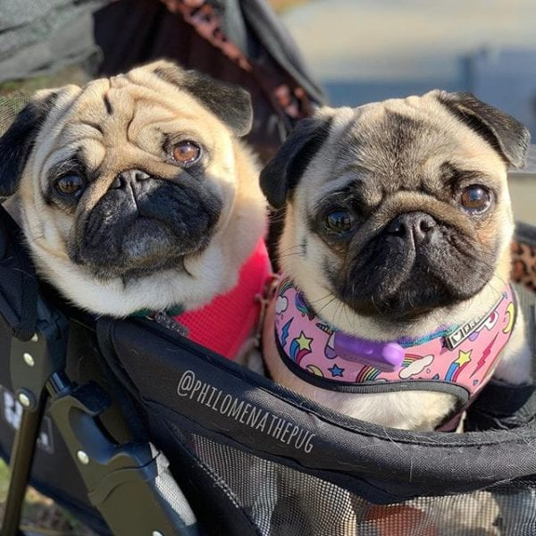 Out shopping for birthday snackies with @matildazpug
