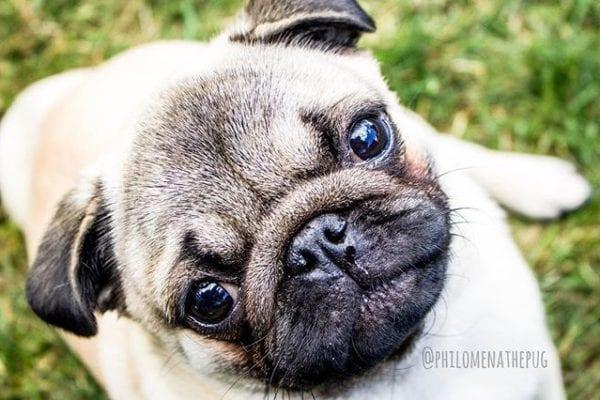 #TBT 🥺 Puppy eyes