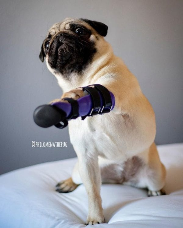 Reaching for the weekend like…. only a few more sleeps until the Vegas Pug Party!!