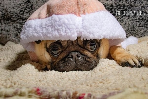 Hiding from Monday like… 🙈