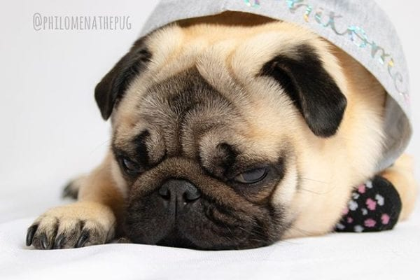 Getting lots of rest today because tonight I have big plans with @matildazpug AND I get to meet the #chinbros @ignatiousqchin 😍