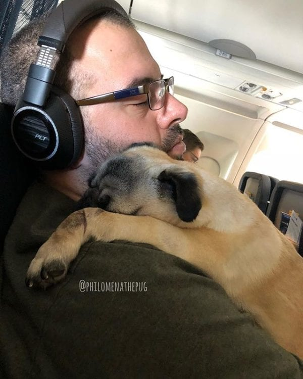 #TBT to my first plane ride and nap time on Daddy!   One week and I'll be flying ✈️ to Vegas for the Pug party!  Hope to see you there! There's still plenty of time to get your @sngdesignco exclusive Vegas Pug Party pin with proceeds going to the amazing @thepugqueen