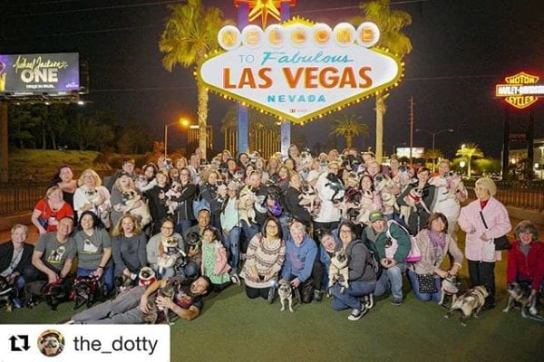 1st night of the Vegas Pug Party was a success! Reposted from: @the_dotty