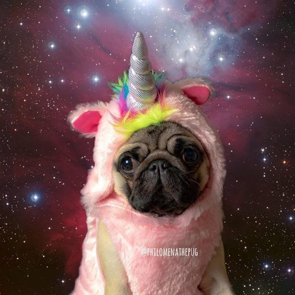 Happy National Unicorn Day!!